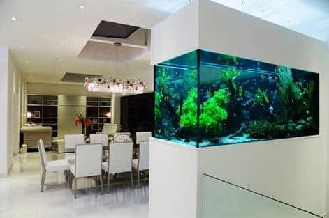 45 Foto Desain Akuarium Rumah Gratis Terbaru Yang Bisa Anda Tiru